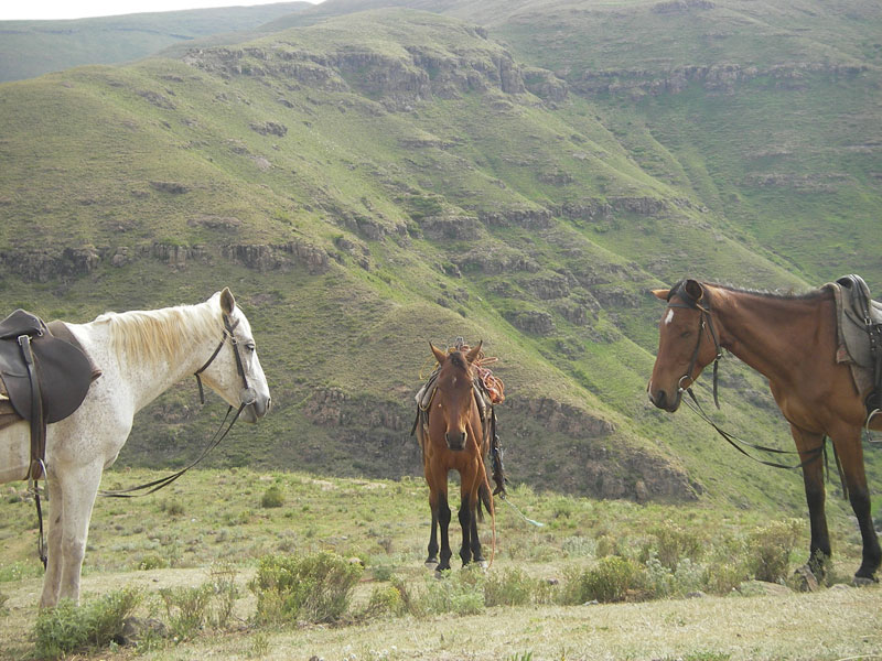 Three Basutho Ponies in Lesotho