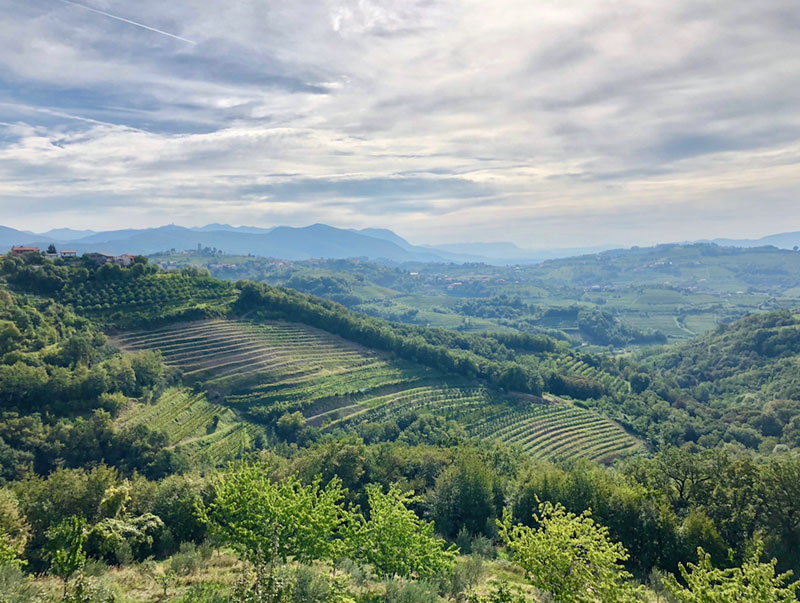 Rolling Hills in Brda Slovenia