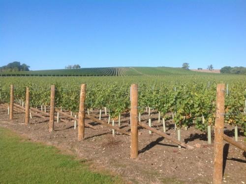 Beautiful-Exton-vineyard-&-slopes
