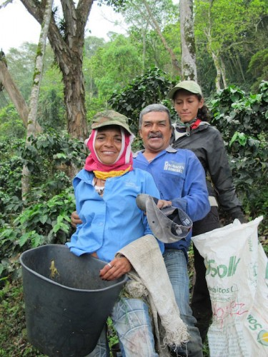 Cherry Picked Coffee - Cherry Pickers on the Santa Barbara Estate Columbia