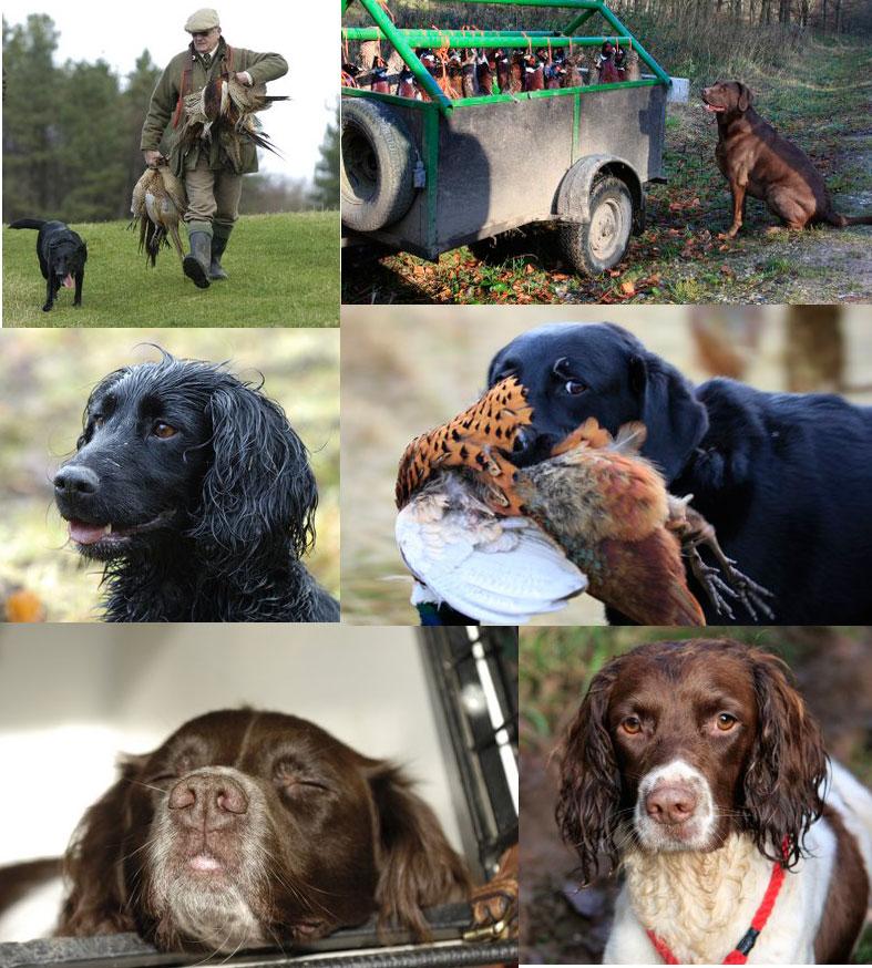 East Dean Dogs