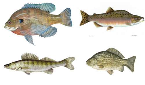 Fishes for Quiz