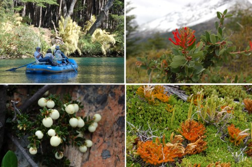 Flowers, Vegetation and Trees growing on glacier