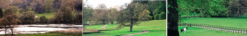 Fonthill Estate Parkland