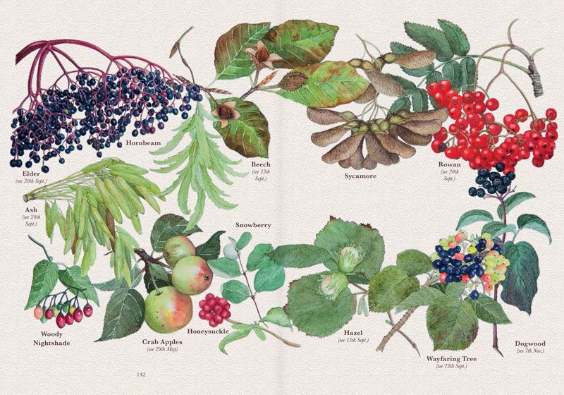 My Devonshire Year - Fruit and Berries