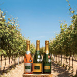 Exton Park Vineyard with award winning sparkling wines