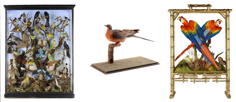 ndian-Birds-Passenger-Pigeon-and-Mackaws-Firescreen