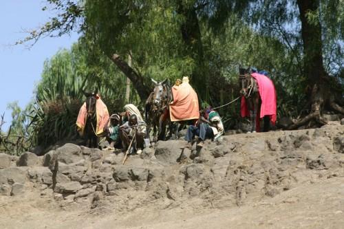 Mules Lalibela
