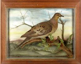 Summers Place Auctions Passsenger Pigeon