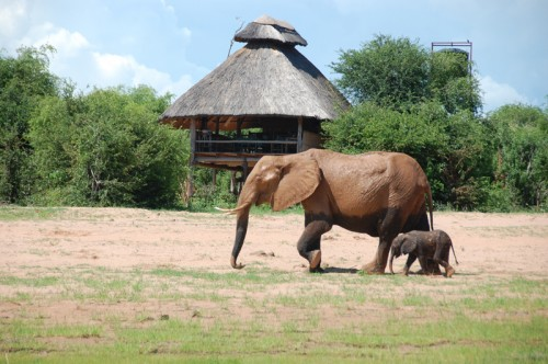 Rhino Safari Camp Elephants Zimbabwe