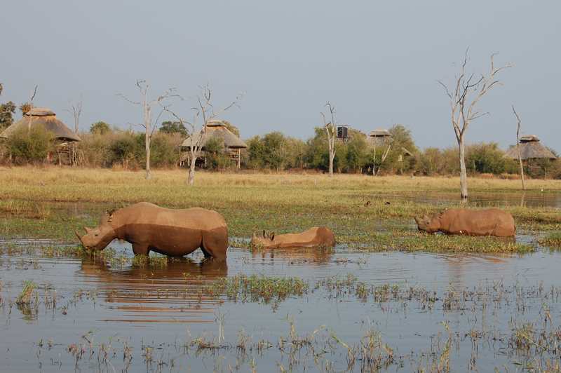 Rhino Safari Camp Zimbabwe