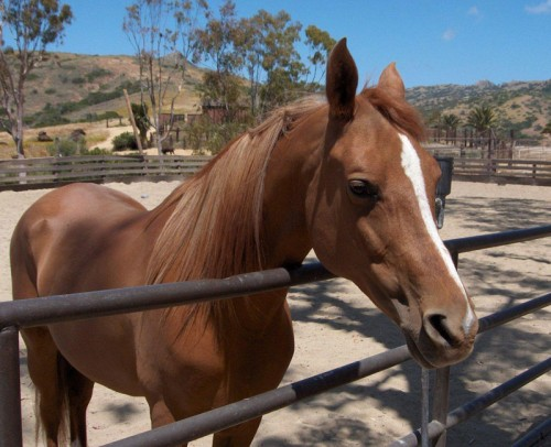 The Wrigley Arab Horse Stud