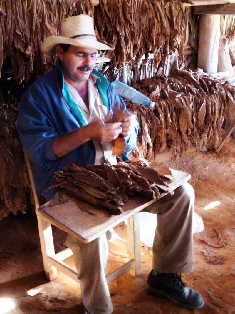 The farmer makes cigars