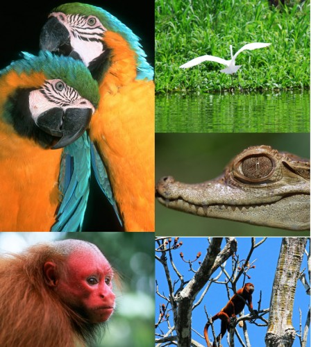Wild Life Peru