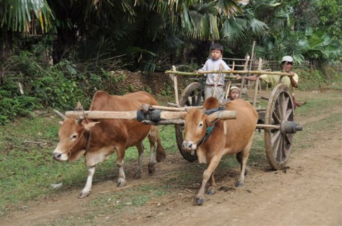 Young taxi cart driver under instruction at Naungkhine