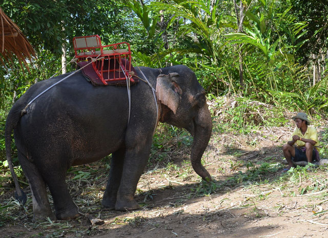 Elephant Trekking through the jungle near Maikhao