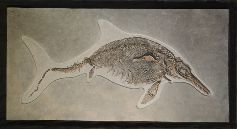 icthyosaurus communis
