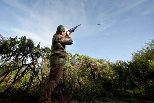 Shooting High Doves in Argentina in March