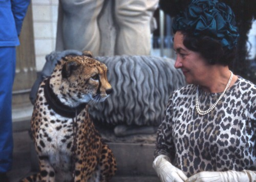 The Emperor's Cheetah meets its match