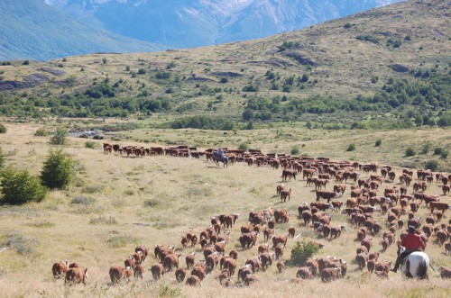 The vast plains of Argentinian Patagonia ideal for cattle raising